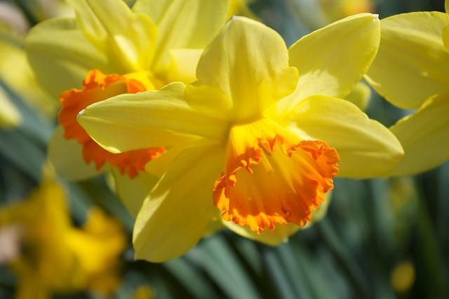 Holy Week Pain, Easter MorningJoy.